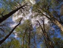 Bosque asoleado Imagenes de archivo