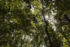Bosque asoleado imagen de archivo libre de regalías