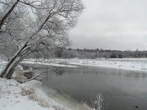 Bosque asoleado del invierno Imagen de archivo libre de regalías