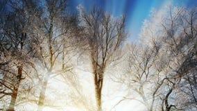 Bosque asoleado del invierno almacen de video