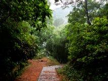 Bosque asombroso con el rastro rocoso y colina con el sol fotografía de archivo