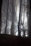 Bosque asustadizo Imágenes de archivo libres de regalías