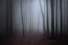 Bosque asustadizo de la persona chapada a la antigua Imagenes de archivo