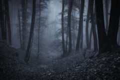 Bosque asustadizo oscuro con niebla en la noche Fotos de archivo