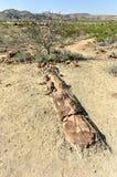 Bosque aterrorizado, Namibia Foto de archivo