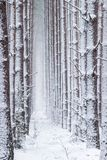 Bosque atmosférico, mágico del invierno de la Navidad por completo de la nieve blanca foto de archivo