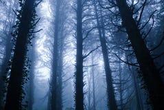Bosque azul Fotos de archivo