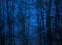 Bosque azul Imagen de archivo