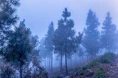 Bosque azul en niebla fotos de archivo libres de regalías