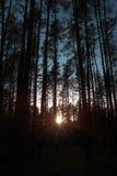 Bosque bajo rayo de sol de la puesta del sol Sun y árboles Imagen de archivo libre de regalías