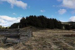 bosque BG fotografía de archivo libre de regalías