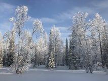 Bosque blanco del invierno Imágenes de archivo libres de regalías