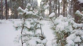 Bosque blanco escarchado del invierno fabuloso con los troncos de árbol oscuros metrajes