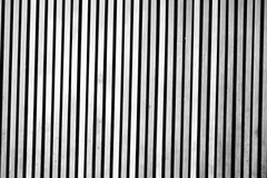 Bosque blanco negro del fondo Foto de archivo libre de regalías