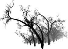 Bosque blanco y negro Fotos de archivo