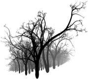 Bosque blanco y negro Imagen de archivo