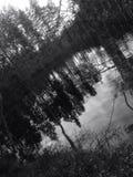 Bosque blanco y negro Imagenes de archivo