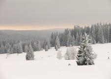 Bosque bohemio Foto de archivo libre de regalías