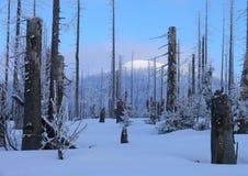 Bosque bohemio Fotos de archivo