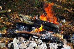 Bosque bonfile Fotos de archivo