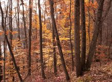 Bosque bonito de la caída al lado de un río Fotografía de archivo