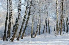 Bosque bonito do vidoeiro do inverno na geada foto de stock royalty free