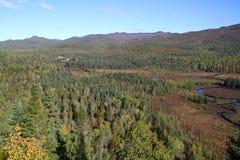 Bosque boreal de Canadá Foto de archivo