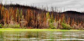 Bosque boreal en el río de Yuokon destruido por el fuego Fotos de archivo