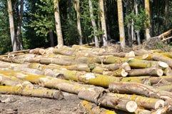 Bosque borrado foto de archivo libre de regalías