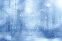 Bosque borroso del invierno del fondo fotos de archivo libres de regalías