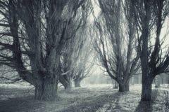 Bosque borroso paisaje del otoño Fotografía de archivo libre de regalías