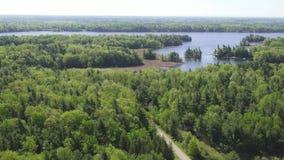 Bosque, bosque, árboles, río, naturaleza, natural almacen de video
