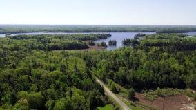 Bosque, bosque, árboles, río, naturaleza, natural almacen de metraje de vídeo