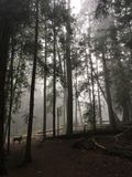 Bosque brumoso Imágenes de archivo libres de regalías