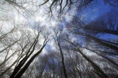 Bosque brumoso Fotos de archivo libres de regalías