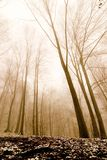 Bosque brumoso Fotos de archivo