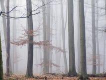 Bosque brumoso Foto de archivo libre de regalías