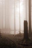 Bosque brumoso Foto de archivo