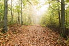 Bosque brumoso Fotografía de archivo libre de regalías