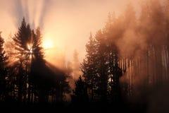 Bosque brumoso con la salida del sol Yellowstone Foto de archivo libre de regalías