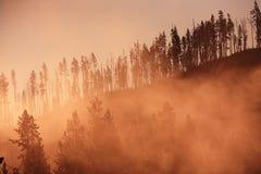 Bosque brumoso con la salida del sol Yellowstone Imagen de archivo
