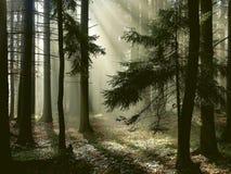 Bosque brumoso con los rayos del sol de la madrugada Fotos de archivo