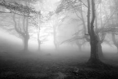 Bosque brumoso de la haya Foto de archivo