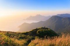 Bosque brumoso de la niebla Imagen de archivo