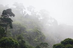 Bosque brumoso de la selva foto de archivo