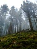 Bosque brumoso en la niebla - bosque negro imagen de archivo libre de regalías