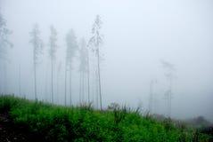 Bosque brumoso en las montañas fotografía de archivo