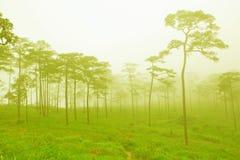 Bosque brumoso misterioso Fotos de archivo libres de regalías