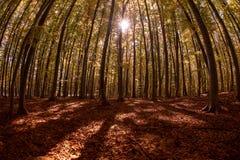 Bosque cárpato en tiempo del otoño, Rumania imagenes de archivo