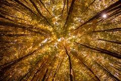 Bosque cárpato en tiempo del otoño, Rumania foto de archivo